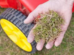 concimazione tappeto erboso muschio nel prato come eliminarlo one giardinaggio