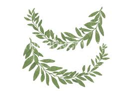 bay leaf wreath bay leaf wreath by planinastore thehungryjpeg