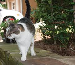 cat running into glass door 5 ways to keep your cat from escaping petsafe articles