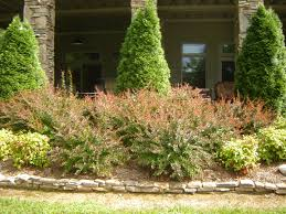 favorite bushes for landscaping ideas design decors image of low
