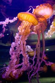 mooonjellies amazing travel pictures amazing pictures images