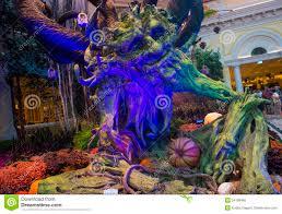 bellagio hotel conservatory u0026 botanical gardens editorial image