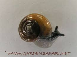 Where Can You Find Snails In Your Backyard Gardensafari Snails Slugs And Worms With Lots Of Pictures