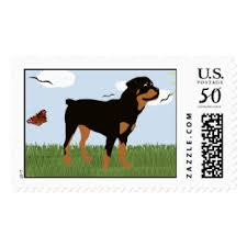 rottweiler cards greeting photo cards zazzle