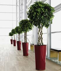 plants for office office plants google search office plants pinterest office