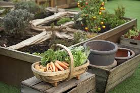 Container Gardening For Food - container gardening