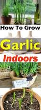 Indoor Garden Containers - 10 easy guides to grow vegetables u0026 fruits in containers gardens