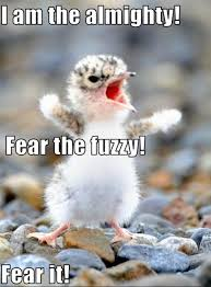 Sluts Memes - 22 best funny images on pinterest ha ha funny stuff and funny