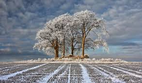 frosty tree photo scoops 10 000 prize for scottish snapper