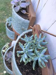Hanging Succulent Planter by Succulent Planters From Light Fixtures My Love 2 Create