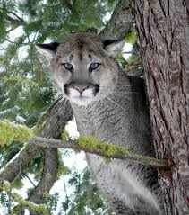 Oregon wildlife images In some oregon counties it would make sense to allow the use of jpg