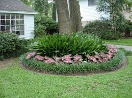 cast iron plants caladiums and liriope around the base of a tree