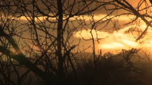 orange sunset through winter branches stock video footage