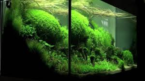 Plants For Aquascaping Aquascaping Aquarium Ideas From The Art Of The Planted Aquarium