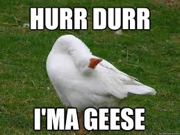 Goose Meme - goose meme keywords and pictures