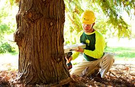 bartlett tree experts tree structure evaluation