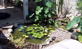 these small pond ideas will make your yard more beautiful