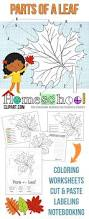 free science coloring pages free parts of a leaf science notebook worksheets coloring pages