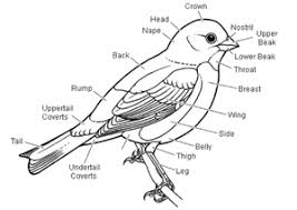 bird anatomy worksheet free worksheets library download and