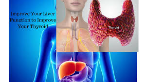 Human Anatomy Thyroid Sluggish Liver May Be The Reason Of Thyroid Disorder