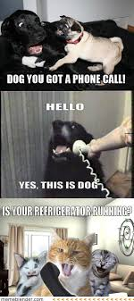 2011 Internet Prank Meme - yes this is dog prank call meme collection