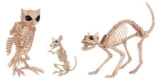 these life size animal skeletons are dying to be your halloween