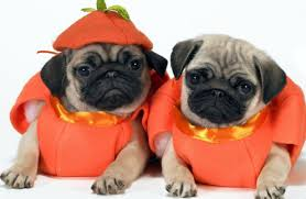 cute dog halloween costumes spin halloween pet costume event