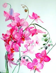 Orchid Flower Pic - best 25 pink orchids ideas on pinterest cymbidium orchids