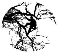 our team of tree experts krige tree service