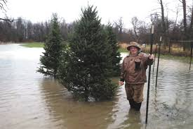 flood waters make for soggy christmas tree sales ohio ag net