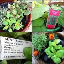 26 best sensory gardens images on pinterest sensory garden