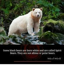 Meme Bear - 25 best memes about polar bears polar bears memes