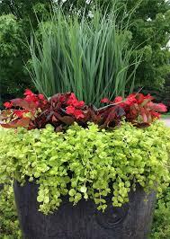 Gardening Tips For Summer - hinsdalenurseries com nursery blog summer container gardening
