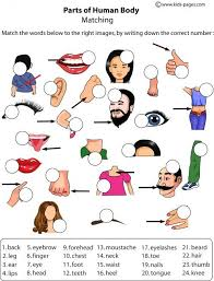 The Human Body Picture Best 10 Body Parts Ideas On Pinterest English Vocabulary