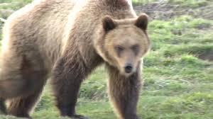 Washington wildlife images Washington state university arboretum and wildlife conservation jpg