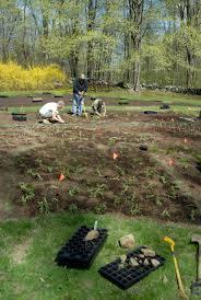 planting native grasses projects u2014 hortulus animae
