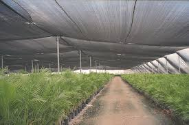Shade Cloth Protecting Your Plants by Shade Cloth 30 80 L U0026m Distribution Inc