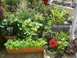 jardin de cuisine les aromatiques au jardin cuisine et bienfaits bien être au