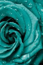 teal roses roses teal blue beauty flowers 4ever turquoise