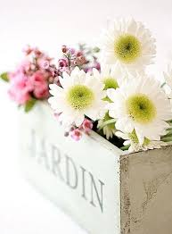 Daisy The Flower - 377 best daisies images on pinterest flowers beautiful flowers
