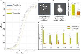 trna genes rapidly change in evolution to meet novel translational