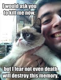 grumpy cat funny meme dump a day