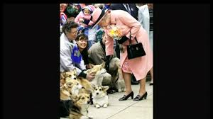 no more corgis for britain u0027s queen elizabeth chicago tribune