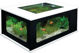 Aquarium Coffee Table Coffee Table Aquarium 7 Home Design Garden Architecture