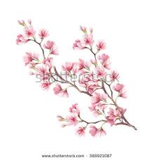 blooming cherry tree branch watercolor illustration stock