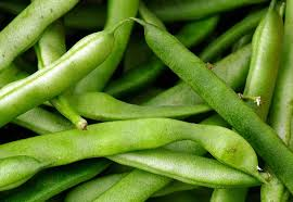 how to grow bush beans and pole beans in your garden