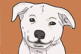 how to draw a dog drawingnow