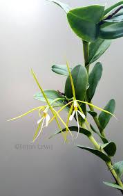 195 best flowers intresting images on pinterest unusual flowers