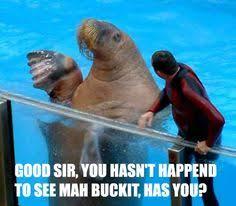 Walrus Meme - walrus bucket meme parenting pinterest meme buckets and memes