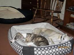 Medium Sized Dog Beds Harmony Grey Nester Orthopedic Dog Bed 40